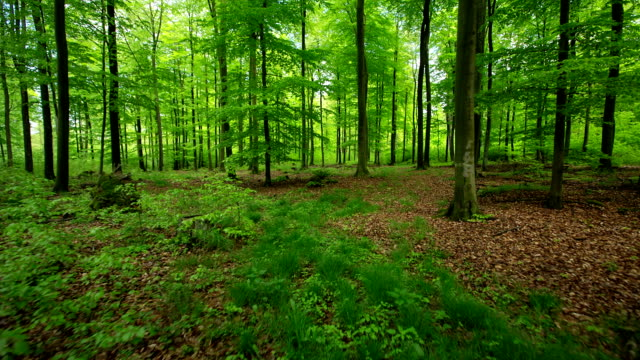 STEADYCAM: Forest Tracking Shot