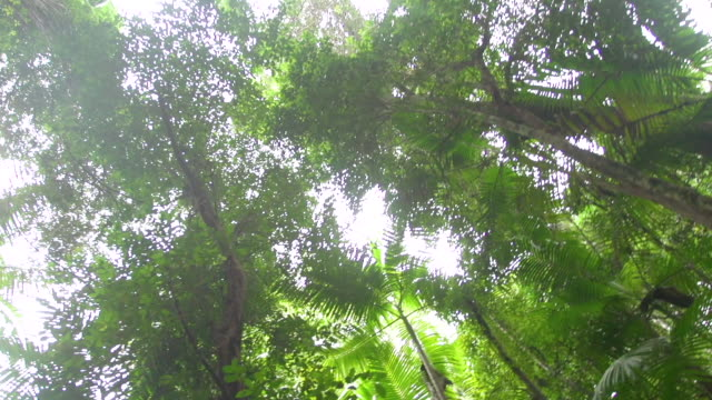 vídeos de stock, filmes e b-roll de forest trees and green leaves - arbusto tropical