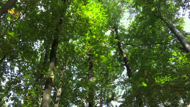 Forest trees from below
