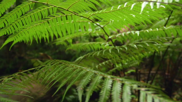 vídeos de stock, filmes e b-roll de forest trees with leaves - arbusto tropical