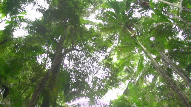 vídeos de stock, filmes e b-roll de forest trees with sun rays shot - arbusto tropical