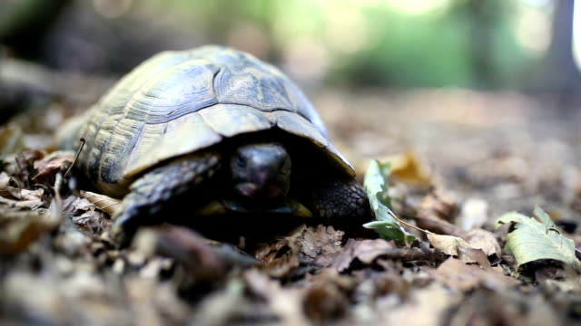 vídeos de stock, filmes e b-roll de floresta de tartaruga - concha parte do corpo animal