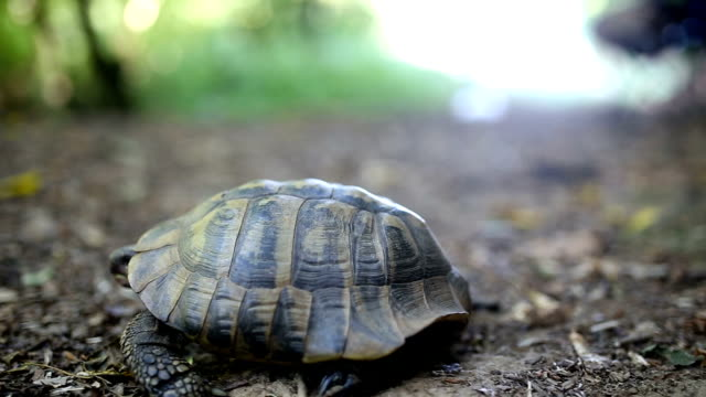 forest turtle - turtle shell stock videos & royalty-free footage