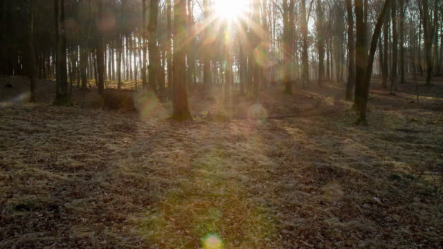 t/l forest undergrowth illuminated with sunrise - season stock videos and b-roll footage