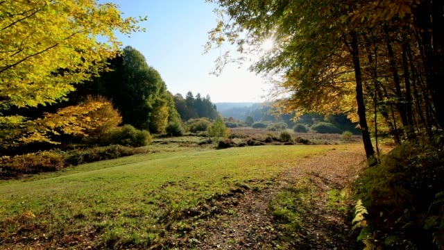 Forest valley with colorful autumn leaves, Rothenbuch, Hafenlohrtal, Spessart, Bavaria, Germany