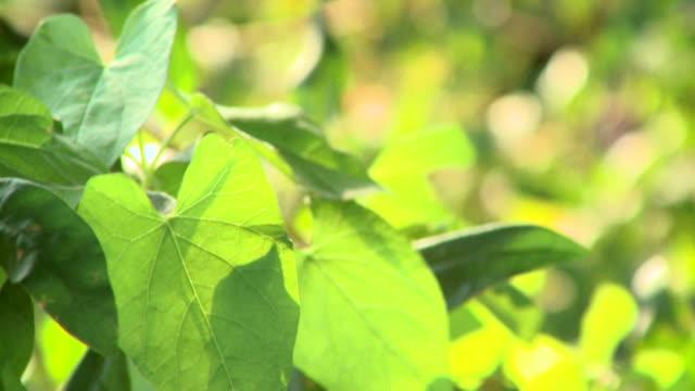 HD: Forest vegetation