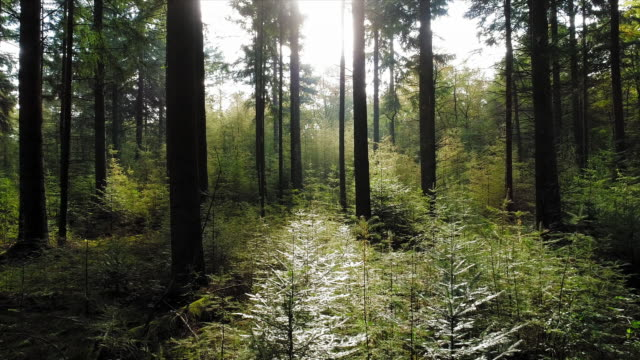 forest - netherlands stock videos & royalty-free footage
