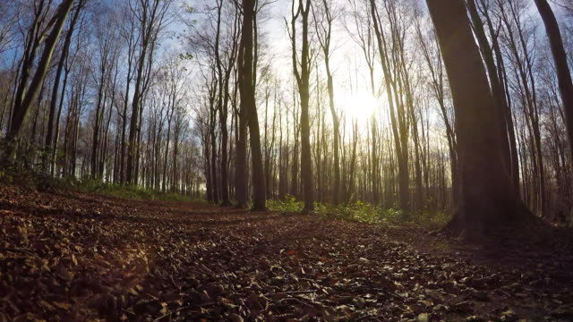 forest - west sussex stock videos & royalty-free footage