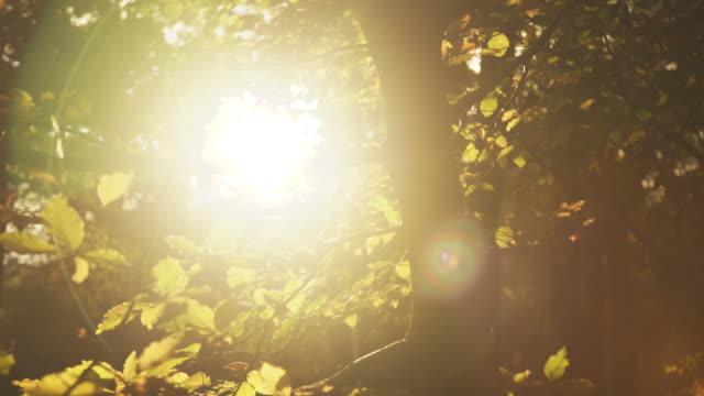 forest - ボーハムウッド点の映像素材/bロール
