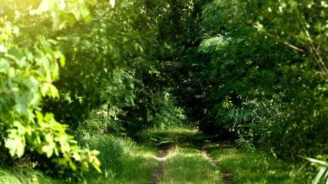 forest - light at the end of the tunnel stock videos & royalty-free footage
