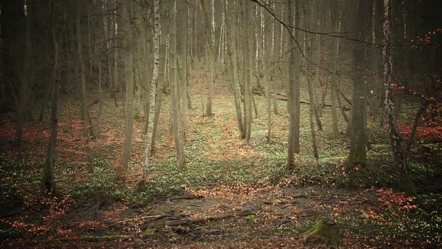 vidéos et rushes de forest - brindille