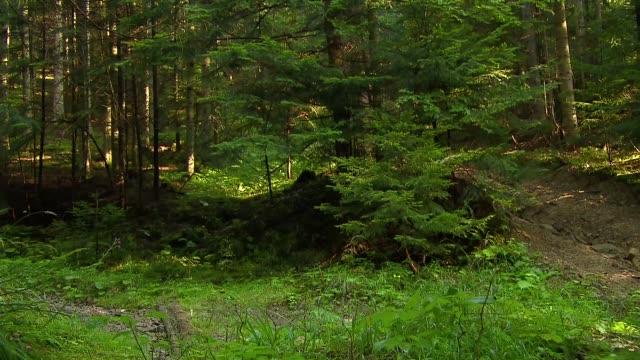 forest - baumgruppe stock-videos und b-roll-filmmaterial