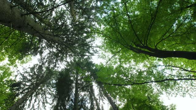 stockvideo's en b-roll-footage met forest - recht eronder