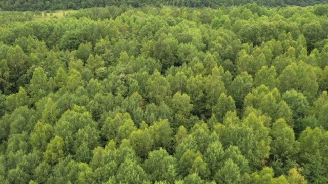 vídeos y material grabado en eventos de stock de bosque - cima del árbol
