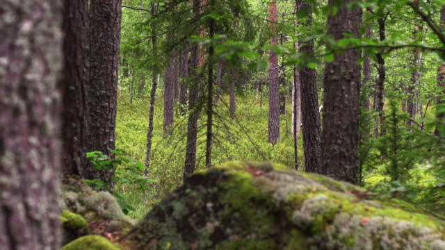 steady cam: forest - sweden stock videos & royalty-free footage