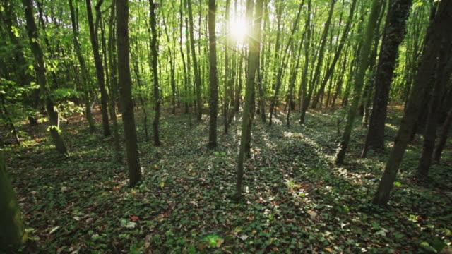 steadycam :林 - 寒帯林点の映像素材/bロール