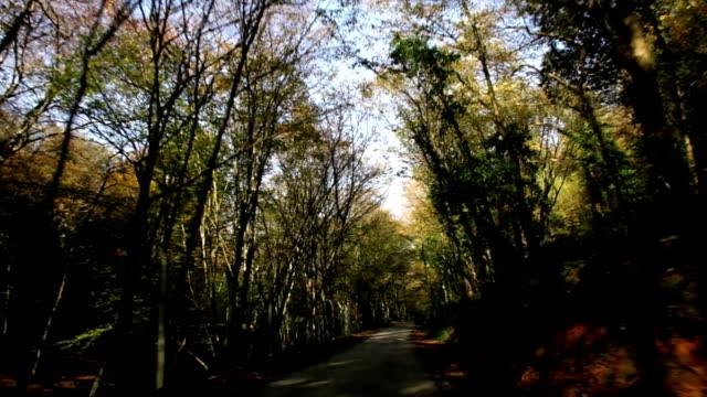 forest - klammer stock-videos und b-roll-filmmaterial