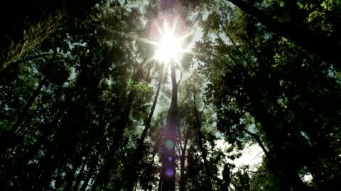 vídeos y material grabado en eventos de stock de bosque - rayo de luz