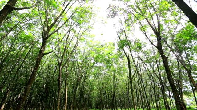 vídeos de stock e filmes b-roll de floresta - alto contraste
