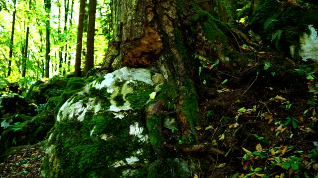 forest - moss stock videos & royalty-free footage
