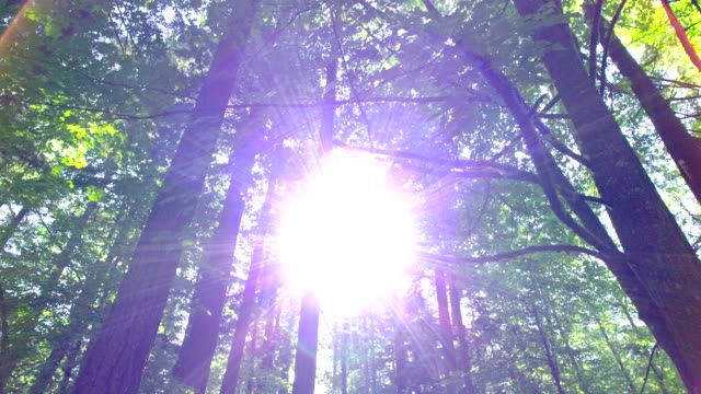forest - douglas fir stock videos and b-roll footage