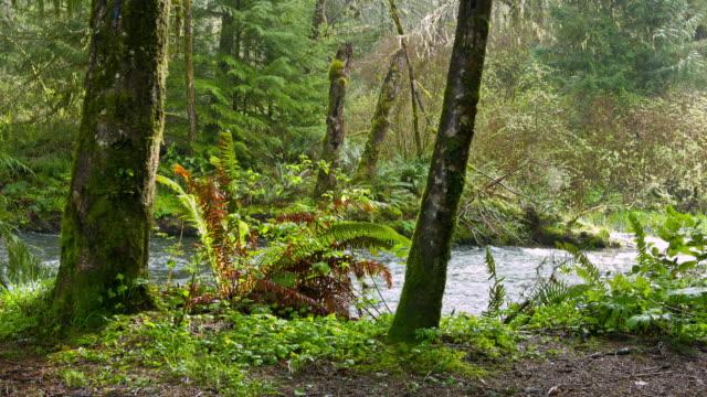 stockvideo's en b-roll-footage met forest - naaldboom