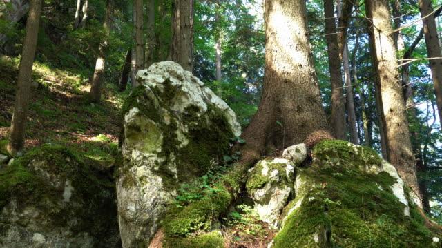 vídeos de stock, filmes e b-roll de floresta - musgo