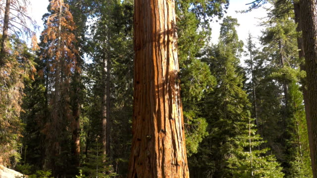 forest - sequoia stock videos and b-roll footage