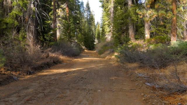 vidéos et rushes de forest - parc national