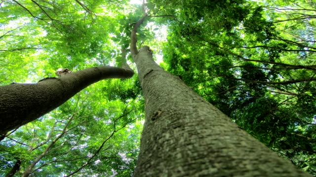 vídeos y material grabado en eventos de stock de bosque - plano de grúa