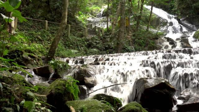 vídeos y material grabado en eventos de stock de cascada del bosque en chiangmai, tailandia. - árbol tropical