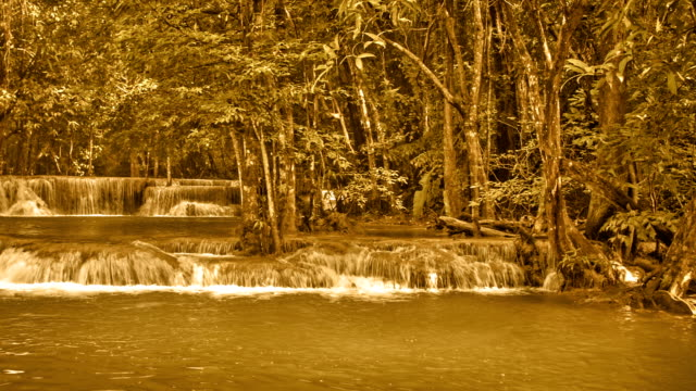 Forest Waterfall  brown