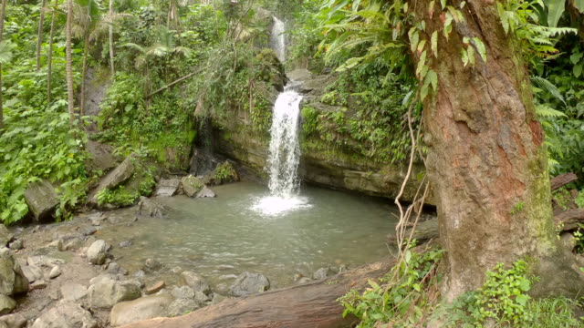 forest waterfall - puerto rico stock videos & royalty-free footage