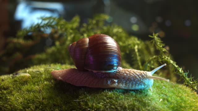forest whitaker - snail stock videos & royalty-free footage