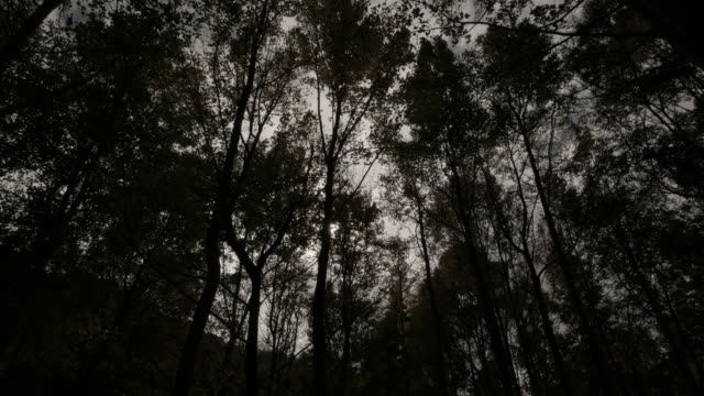 Forest, wind, sunlight, shadow, Taiwan