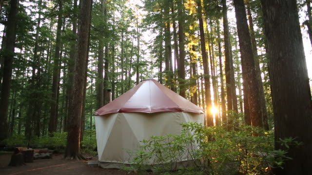A forest with a small yurt and the sun shining behind it.