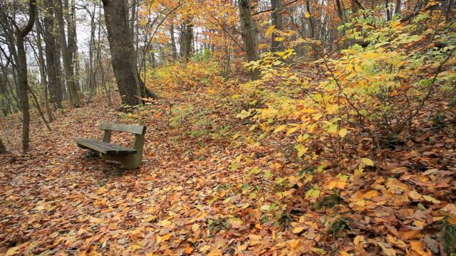foresta con panchina pubblica - novembre video stock e b–roll