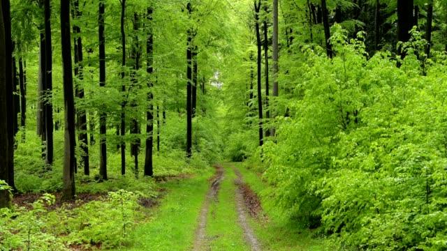 vídeos de stock, filmes e b-roll de forest with path after rain in spring, spessart, bavaria, germany - faia árvore de folha caduca
