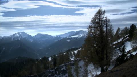 forest with snow coming down - 40 sekunder eller längre bildbanksvideor och videomaterial från bakom kulisserna