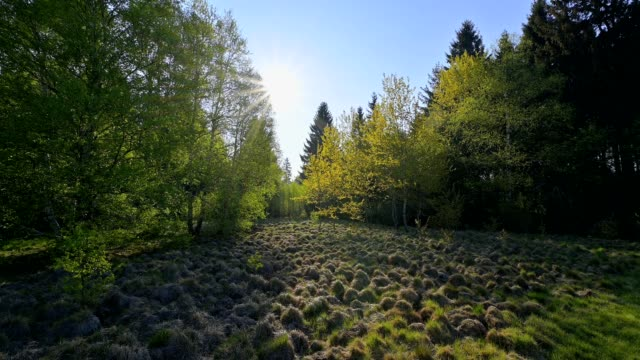 forest with sun in bog, schwarzes moor, fladungen, rhön, bavaria, germany - tranquility stock-videos und b-roll-filmmaterial