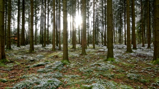 forest with sun in the winter, waldbrunn, odenwald, baden-wurttemberg, germany - moss stock videos & royalty-free footage