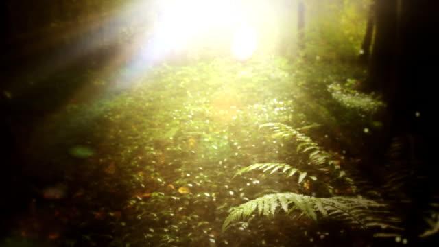 Wald mit Sonne loop