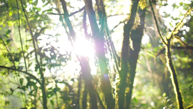 forest with sunlight in the forest morning time green nature , slow motion - plant attribute stock videos and b-roll footage