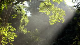 Forest with sunlight shining