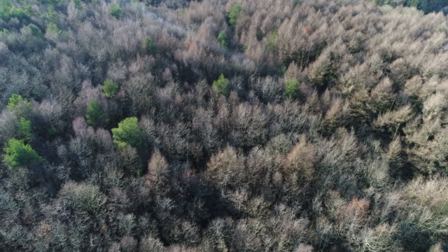 forest with trees without leaves and coniferous seen by drone - normandie stock-videos und b-roll-filmmaterial