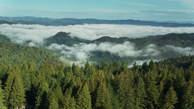 forested hills covered by fog - aerial - coast redwood stock videos & royalty-free footage