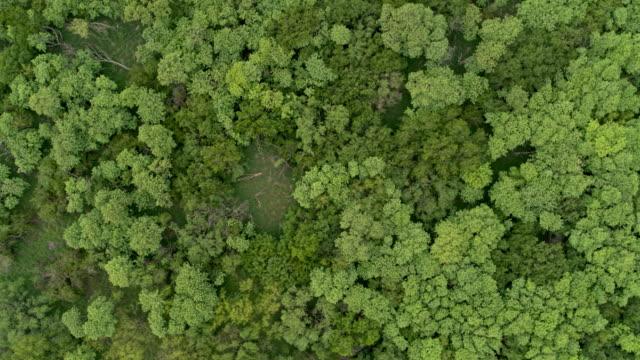 forested landscape, lower rio grande valley - draufsicht stock-videos und b-roll-filmmaterial