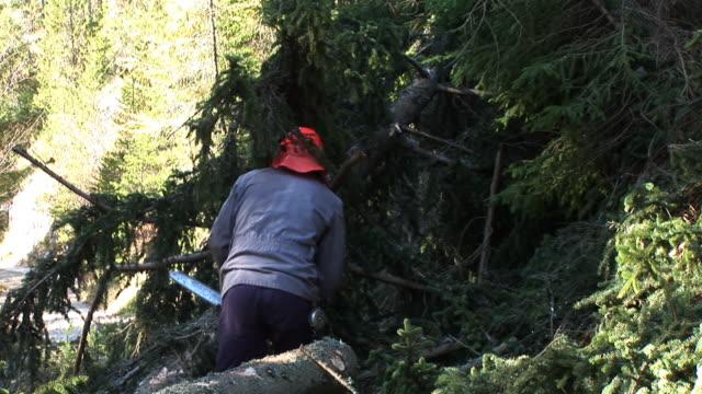 vídeos de stock, filmes e b-roll de hd: forester no trabalho - forester