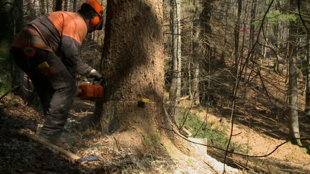 vídeos de stock, filmes e b-roll de hd câmera lenta: forester no trabalho - forester