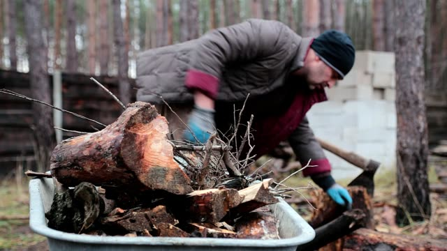 Forester collects the firewood in the wheelbarrow.